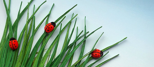 quilled-ladybugs-in-the-grass