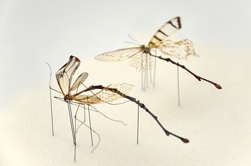 39_twig-fly_02